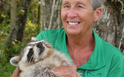 Case Study: Brand Development for Wildlife Education Project (WEP) & Trouper the Blind Raccoon